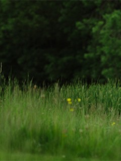 kimberleyandscottjohnharrisphotographyslider